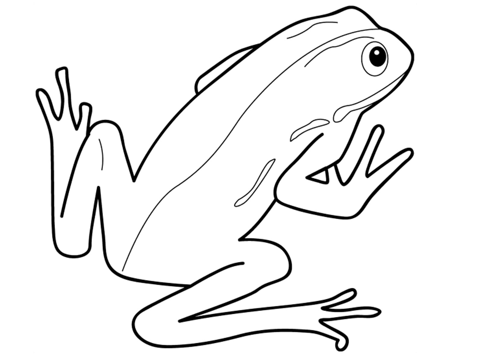 Amphibian Drawing At Getdrawings
