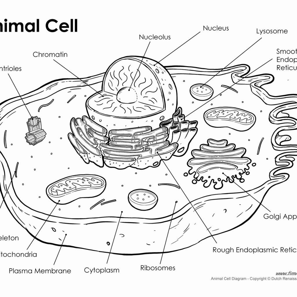 Human Cell Parts Label Worksheet