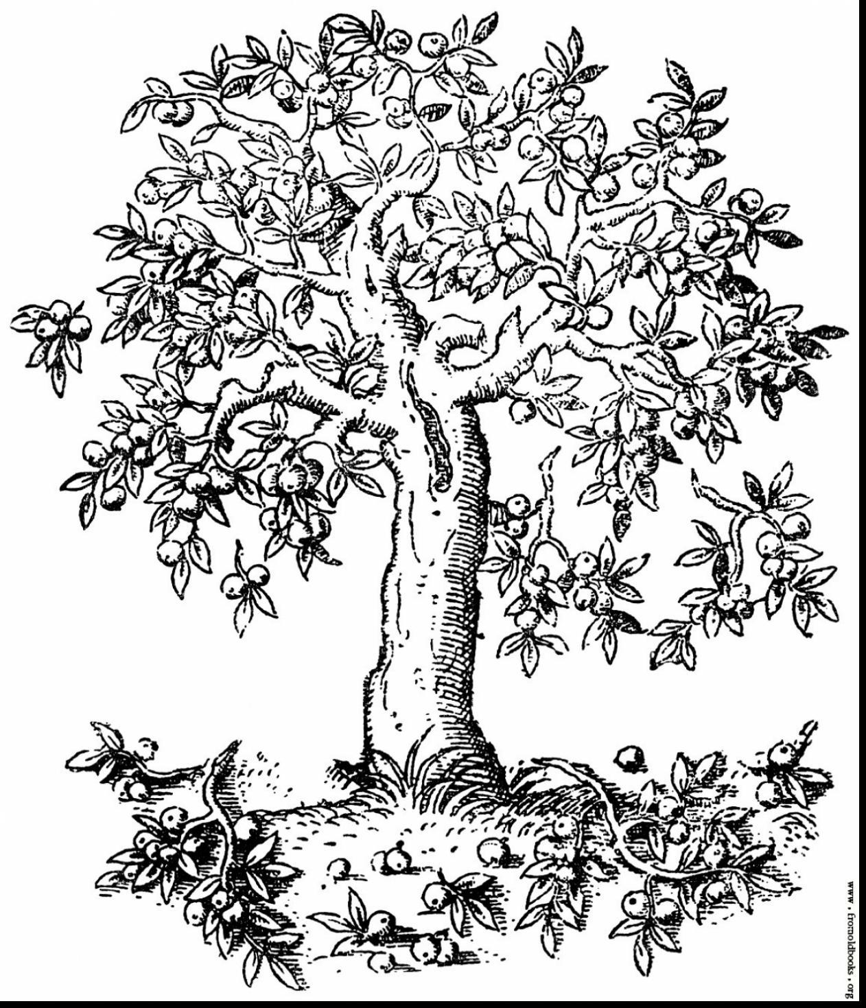 Apple Tree Branch Drawing At Getdrawings