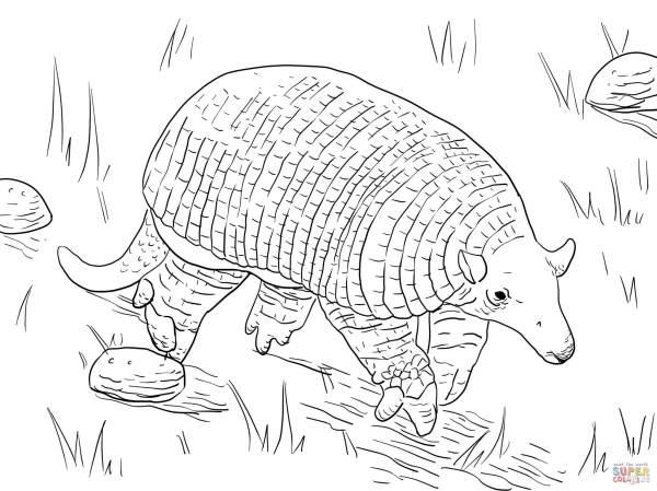 armadillo coloring page # 50