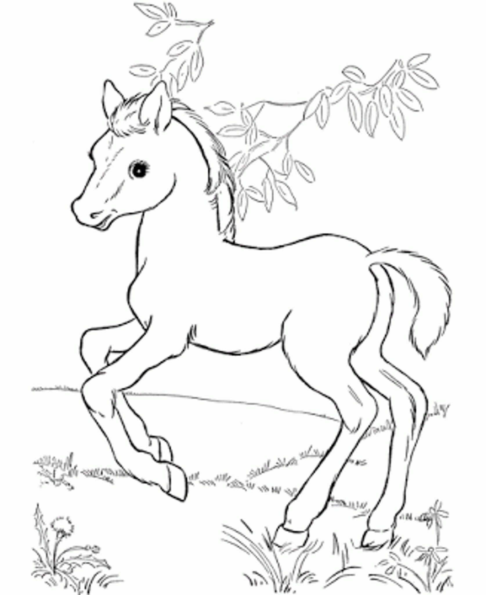 Baby Horse Drawing At Getdrawings