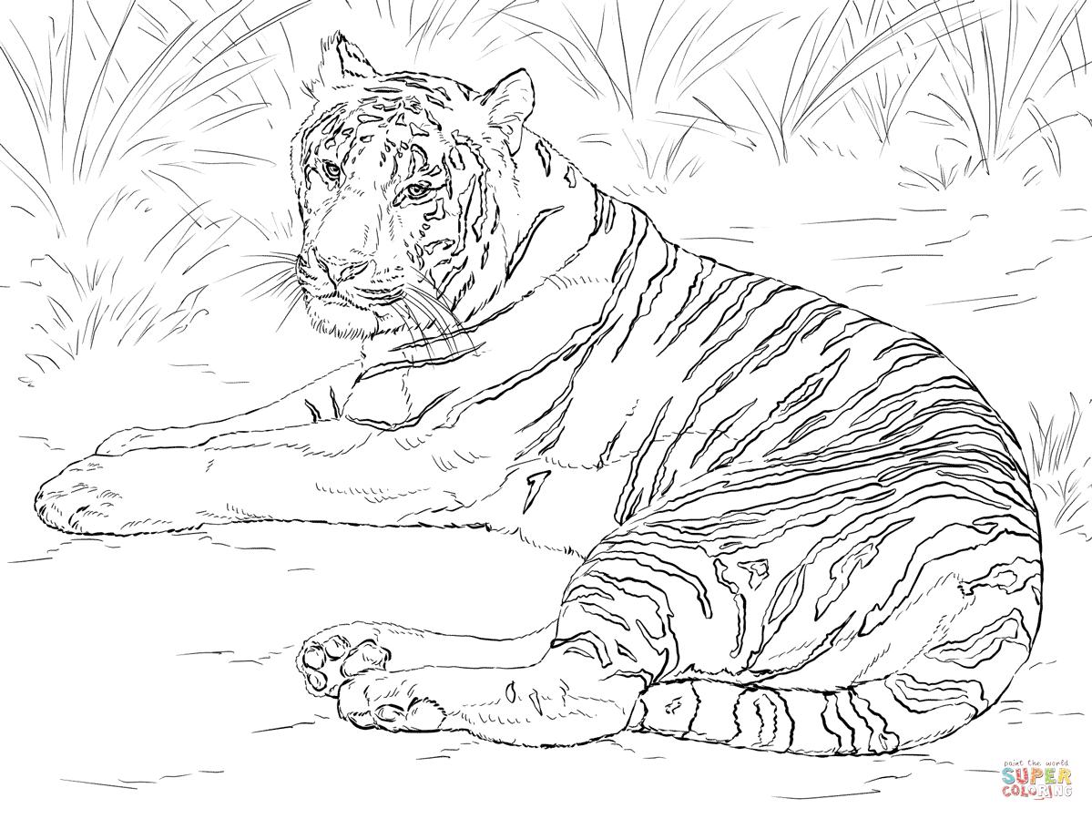 Baby Tiger Drawing At Getdrawings