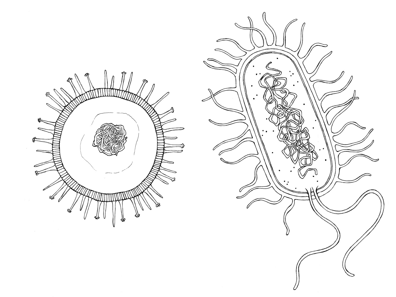 Viruses And Bacteria Worksheet