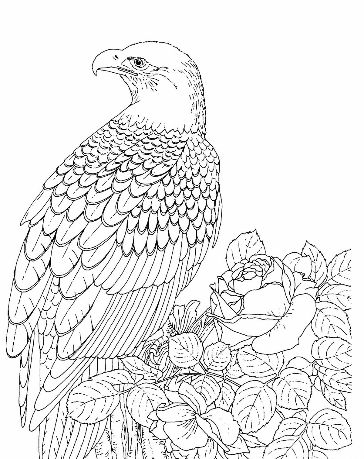 Bald Eagle Outline Drawing At Getdrawings