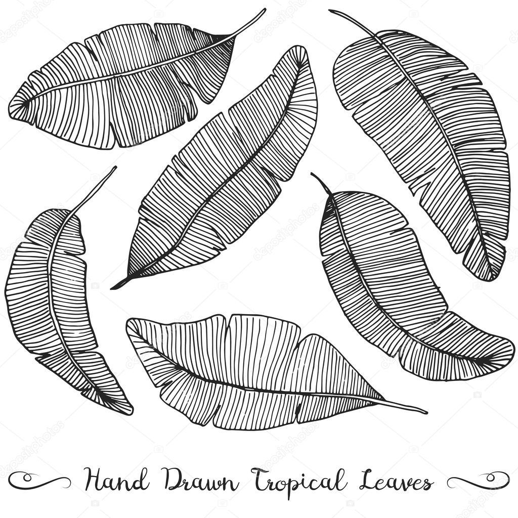 Banana Leaf Drawing At Getdrawings