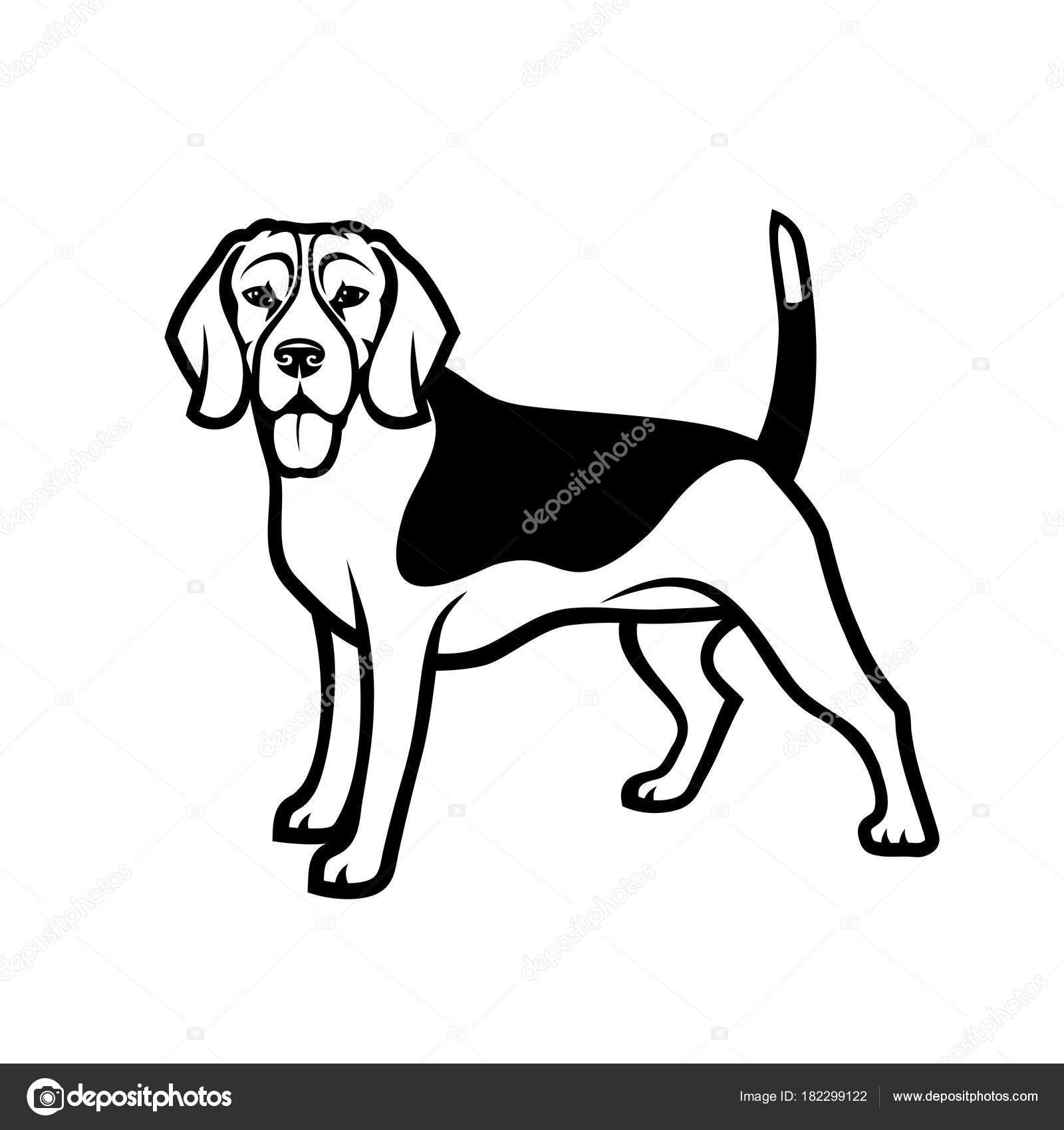 Beagle Dog Drawing At Getdrawings