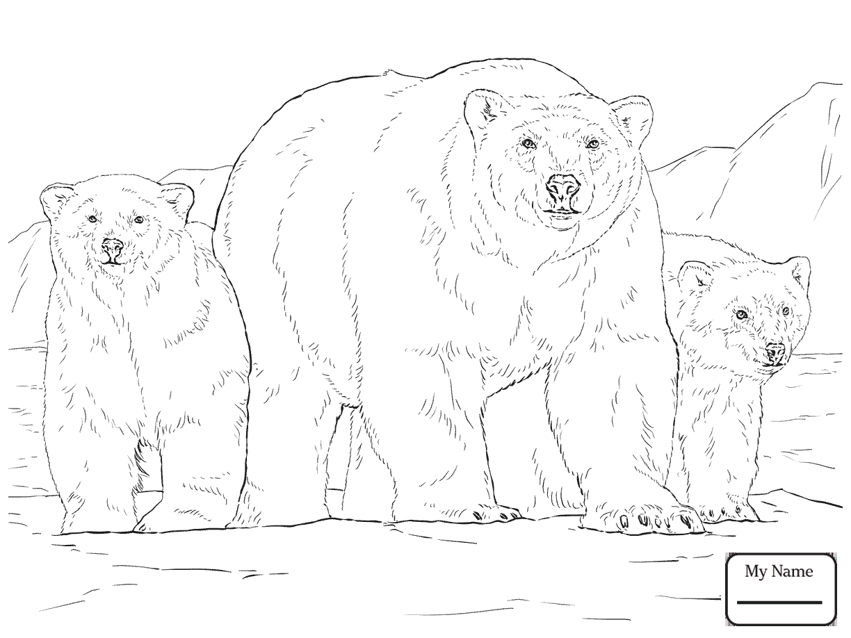 Bear Cub Drawing At Getdrawings