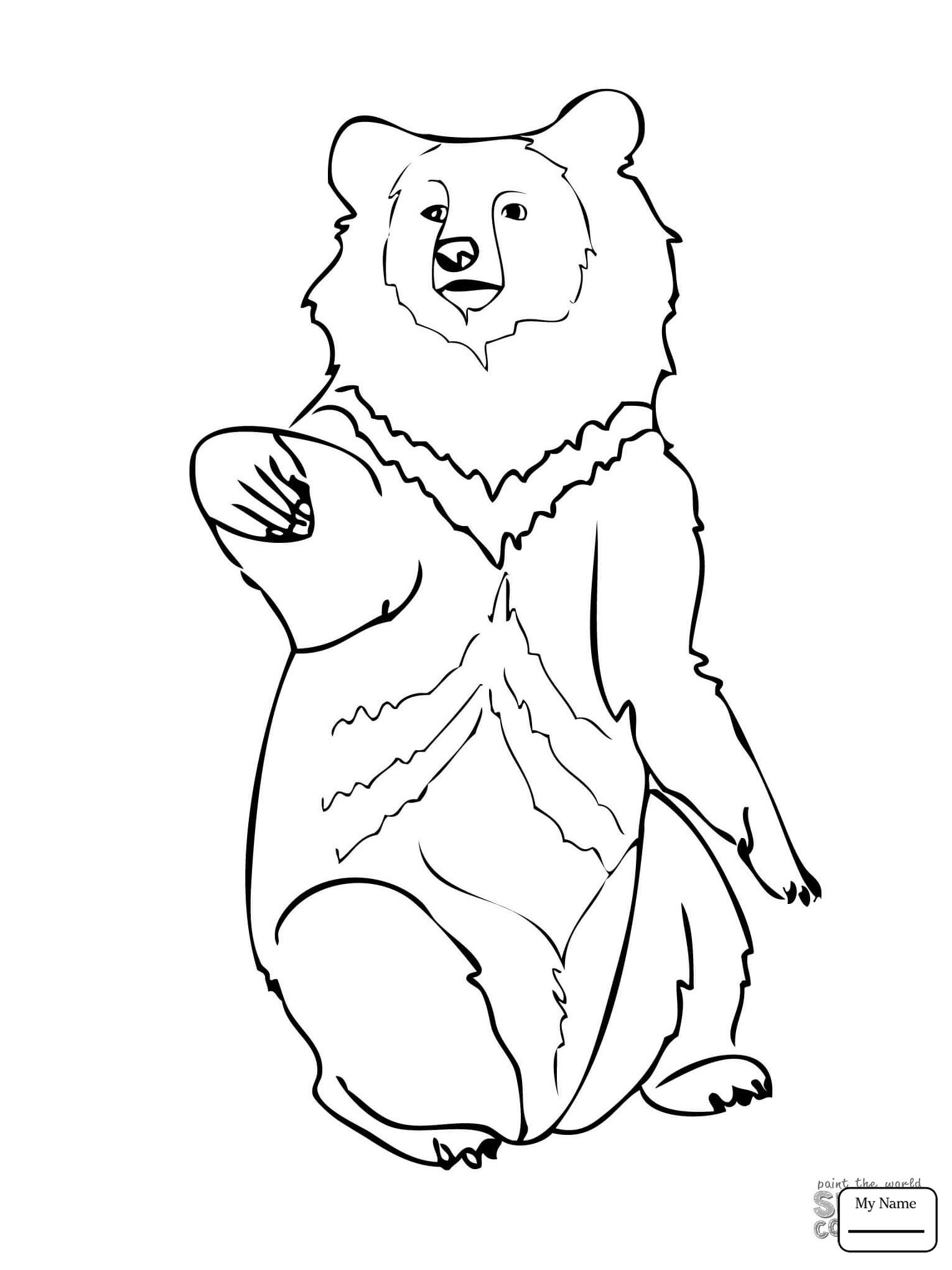 Bear Cub Drawing At Getdrawings