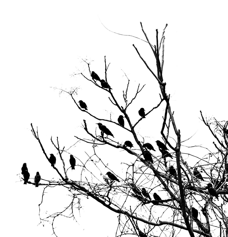 Bird On Tree Drawing At Getdrawings
