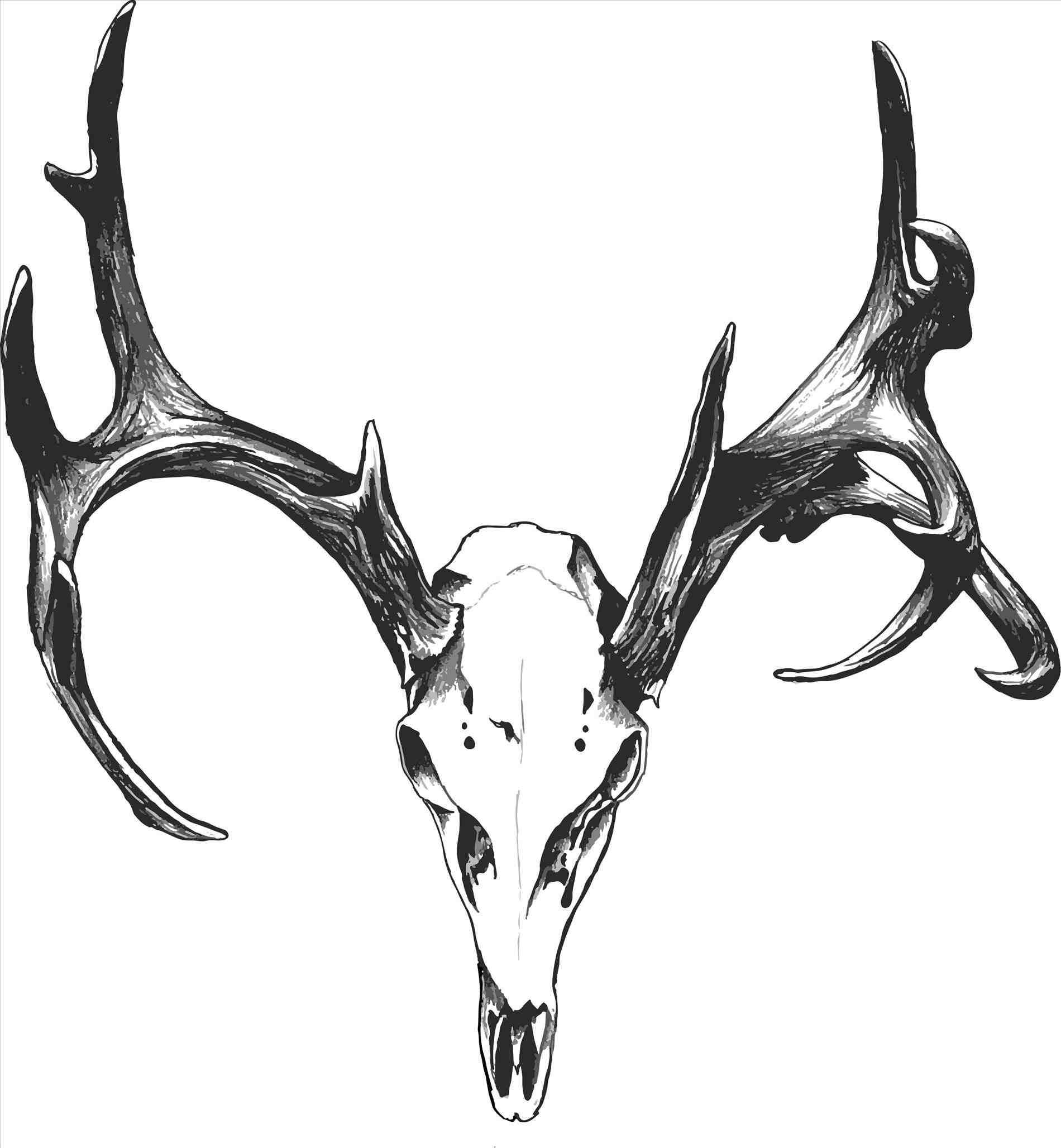 Black And White Deer Drawing At Getdrawings