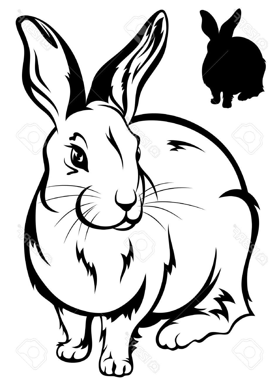 Black And White Rabbit Drawing at GetDrawings | Free download (950 x 1300 Pixel)
