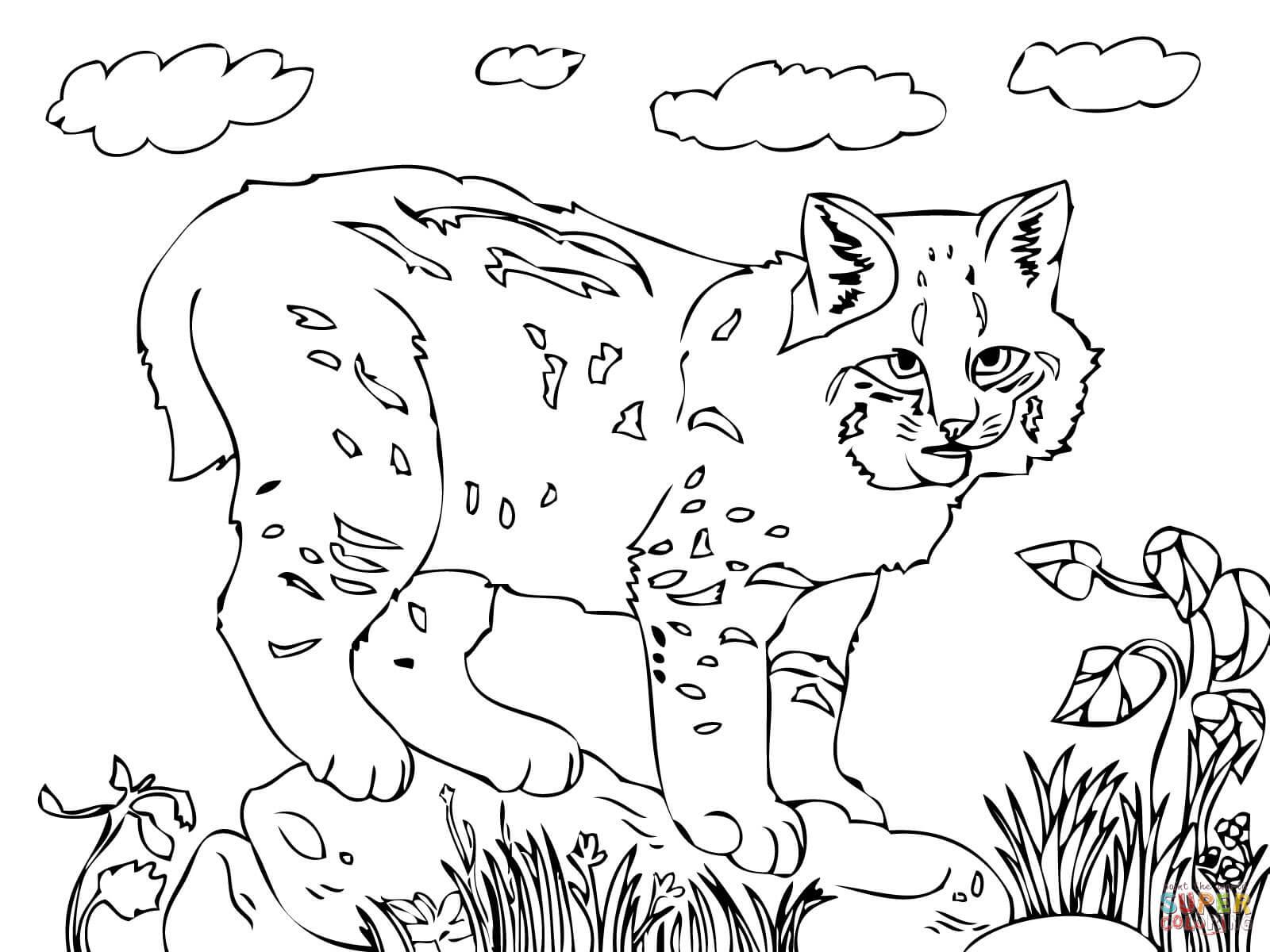 Bobcat Drawing At Getdrawings
