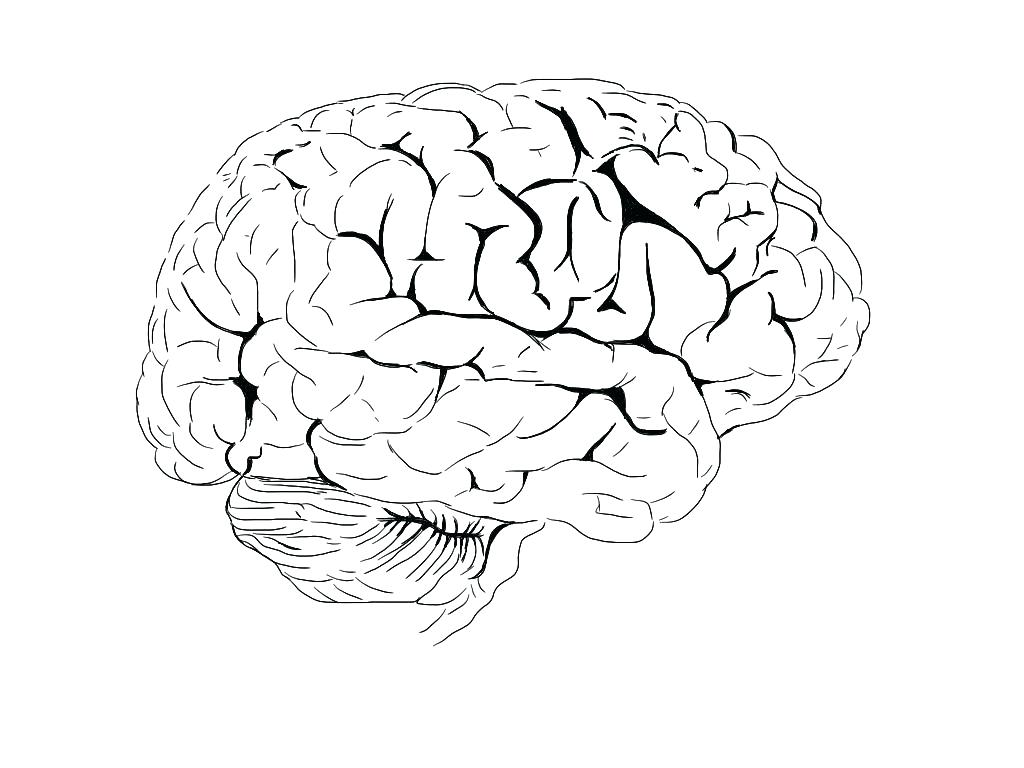 Brain Drawing Images At Getdrawings