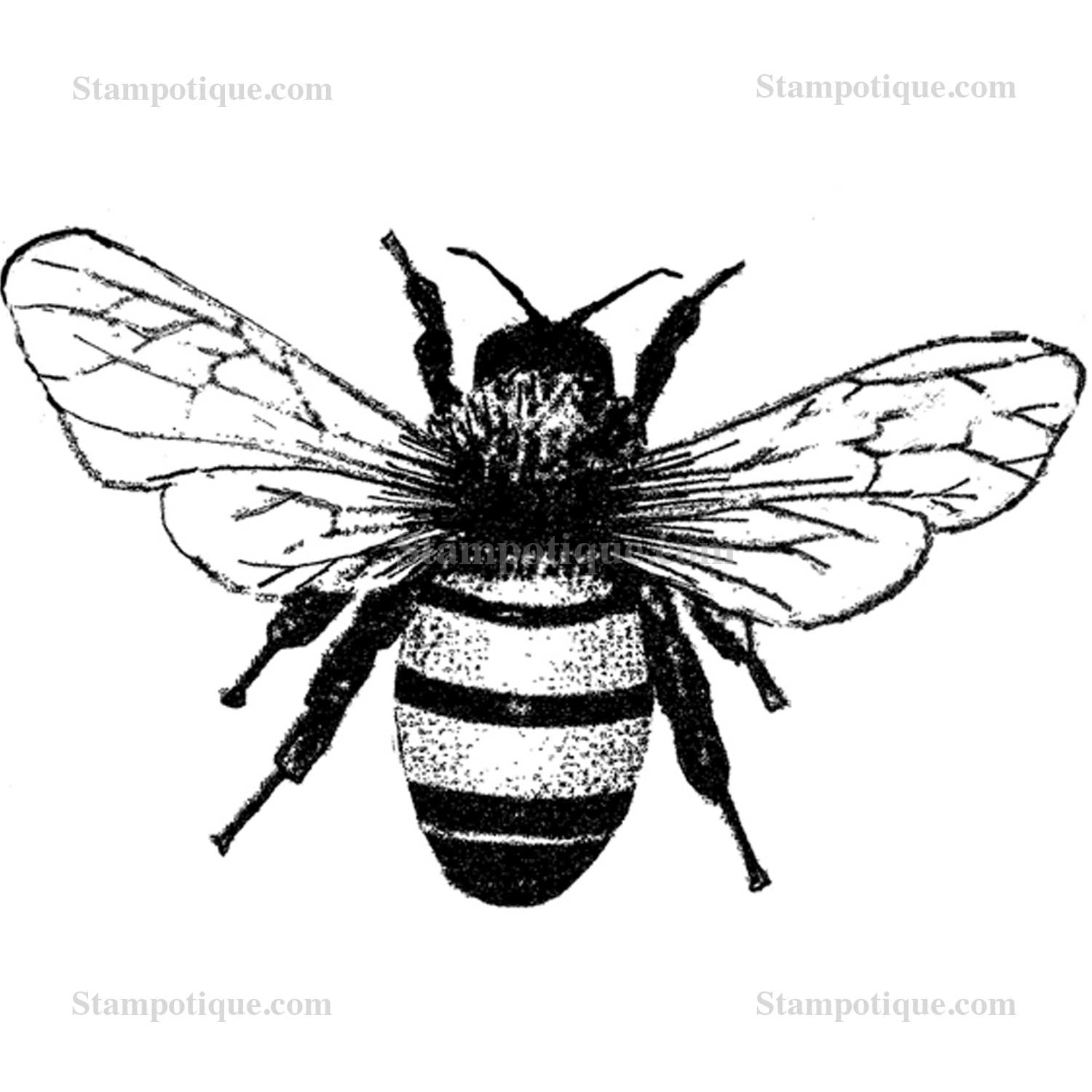 Bumblebee Insect Drawing At Getdrawings