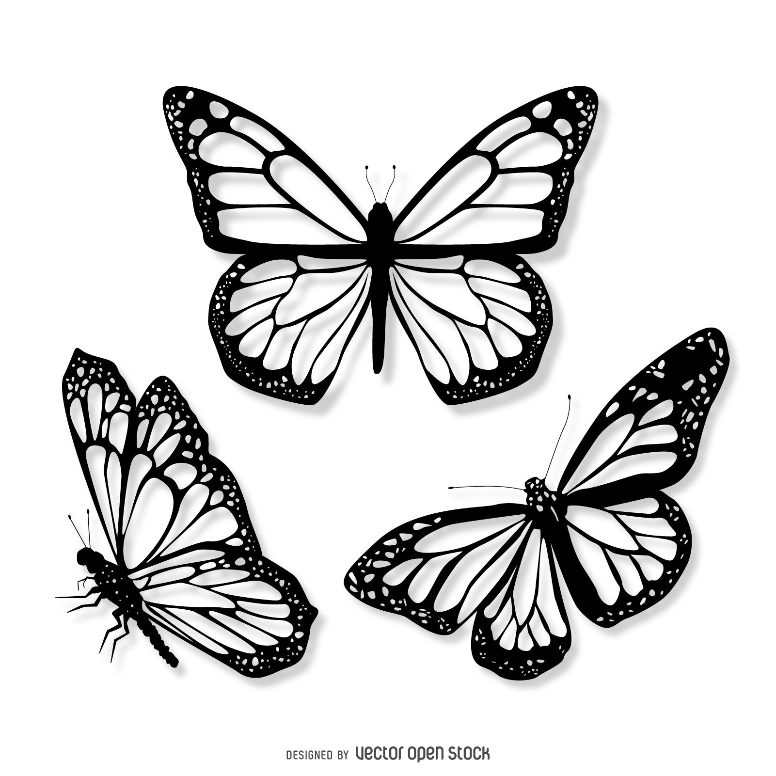Butterfly Line Drawing Images At Getdrawings