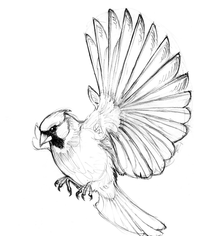 Cardinals Drawing At Getdrawings