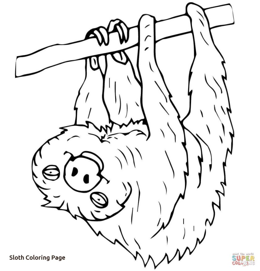 cartoon sloth drawing at getdrawings  free download