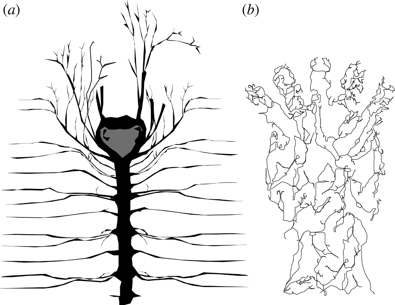 Central Nervous System Drawing At Getdrawings