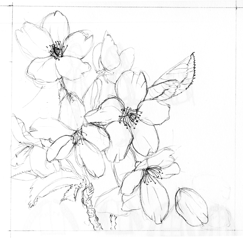 Cherry Blossom Flowers Drawing At Getdrawings