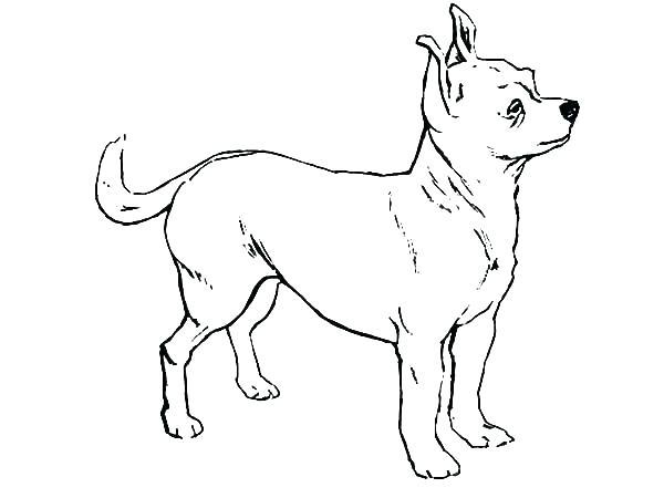 chihuahua dog drawing at getdrawings  free download