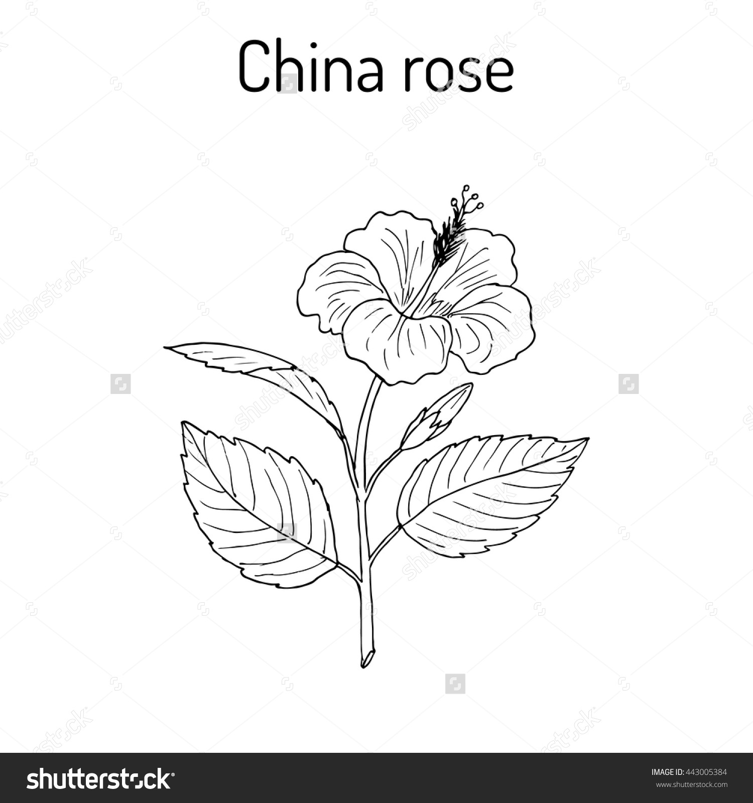 Chinese Flowers Drawing At Getdrawings