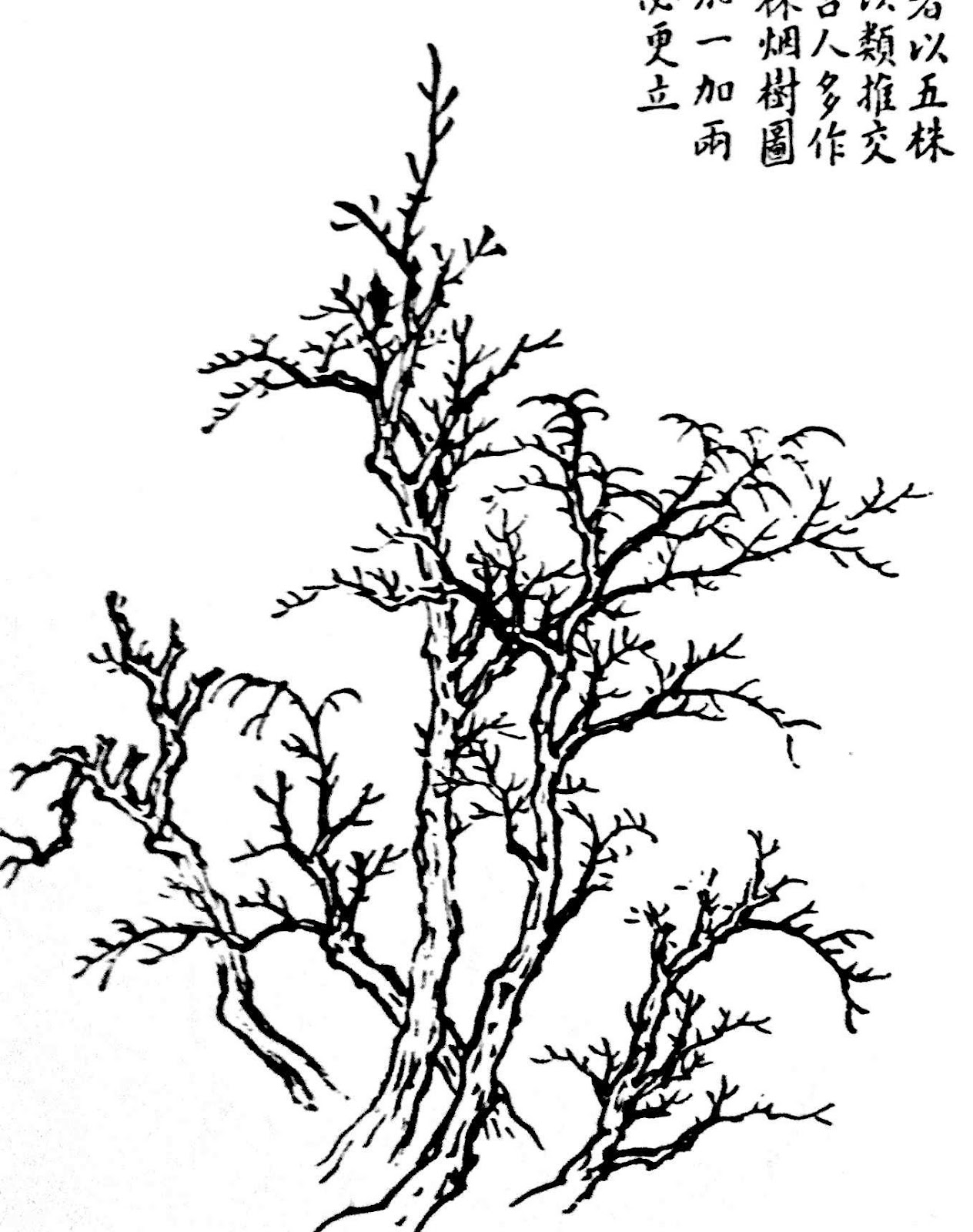 Chinese Tree Drawing At Getdrawings