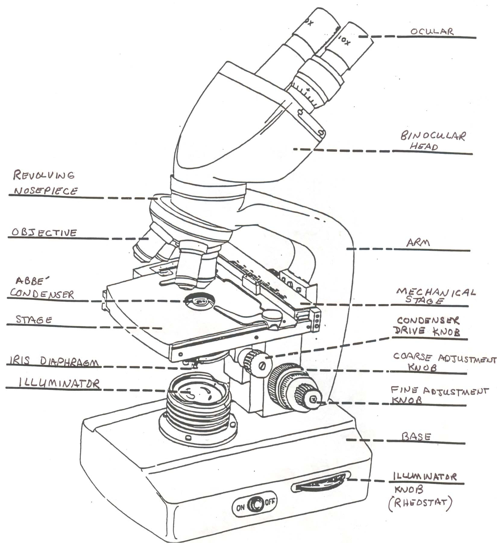 Compound Light Microscope Drawing At Getdrawings