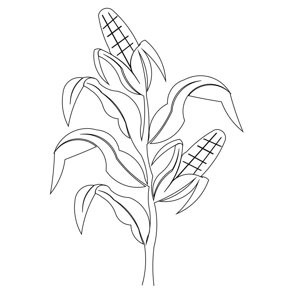 Corn Stalk Coloring Page Free Coloring Pages Download | Xsibe corn ...