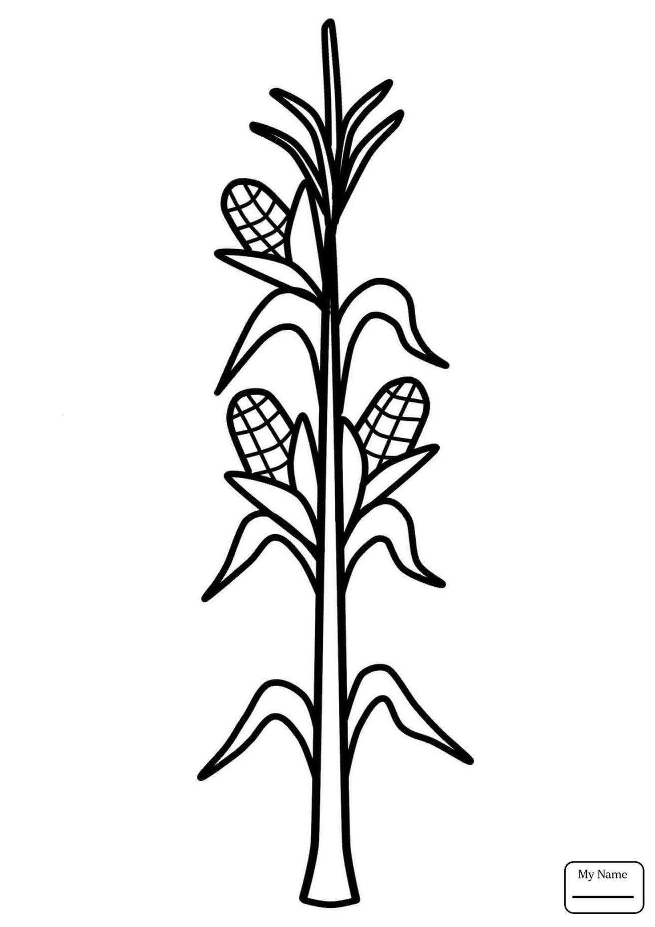 Corn Stalk Drawing At Getdrawings