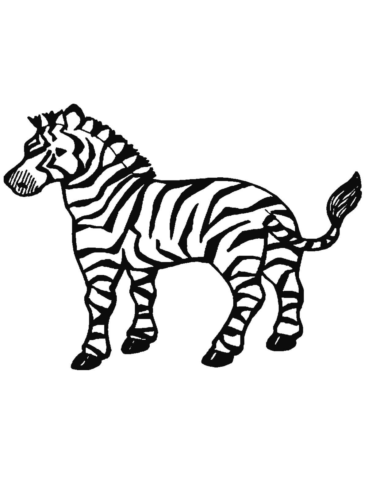 Cute Zebra Drawing At Getdrawings