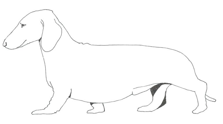 dachshund line drawing at getdrawings  free download