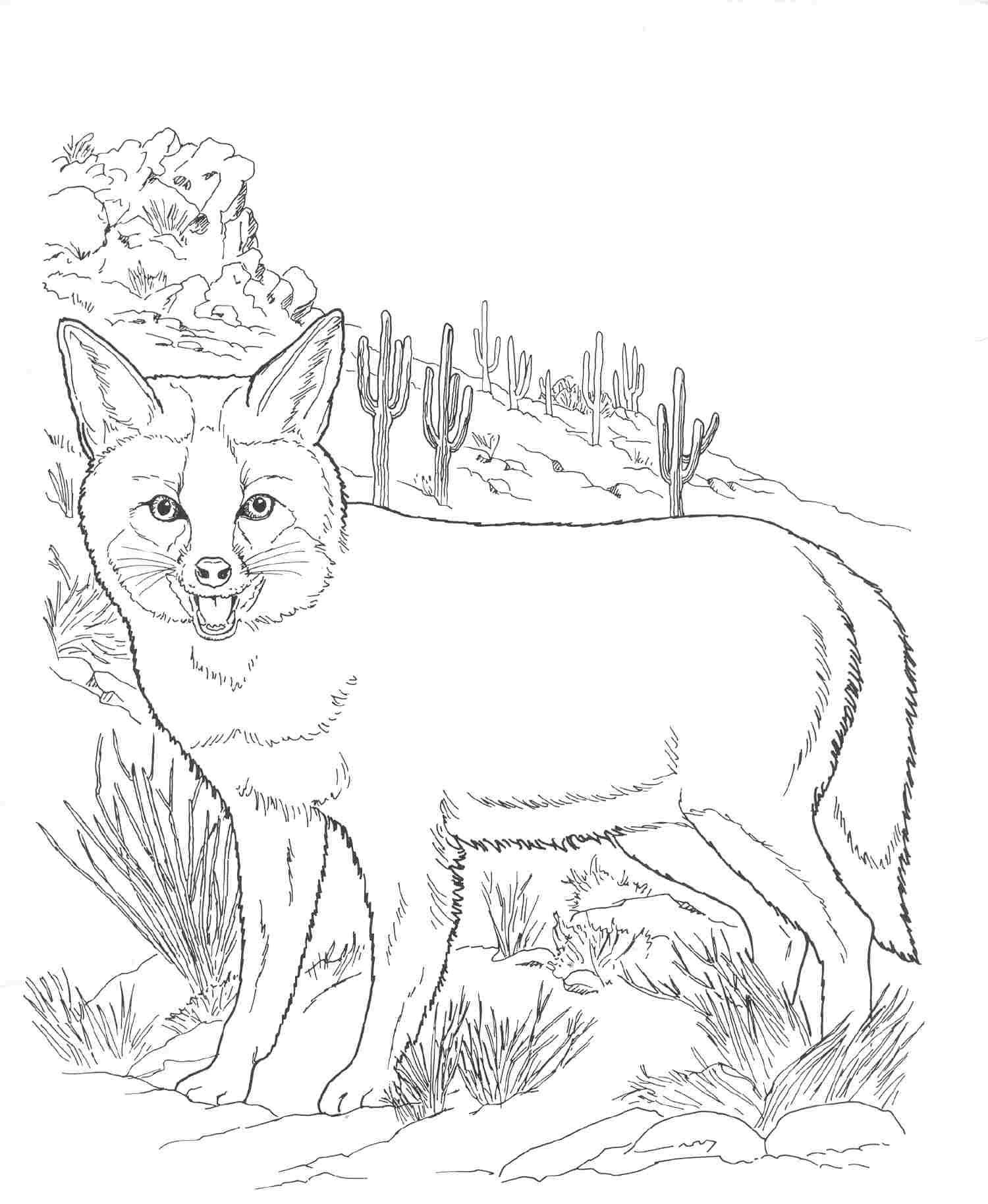 Desert Animals Drawing At Getdrawings