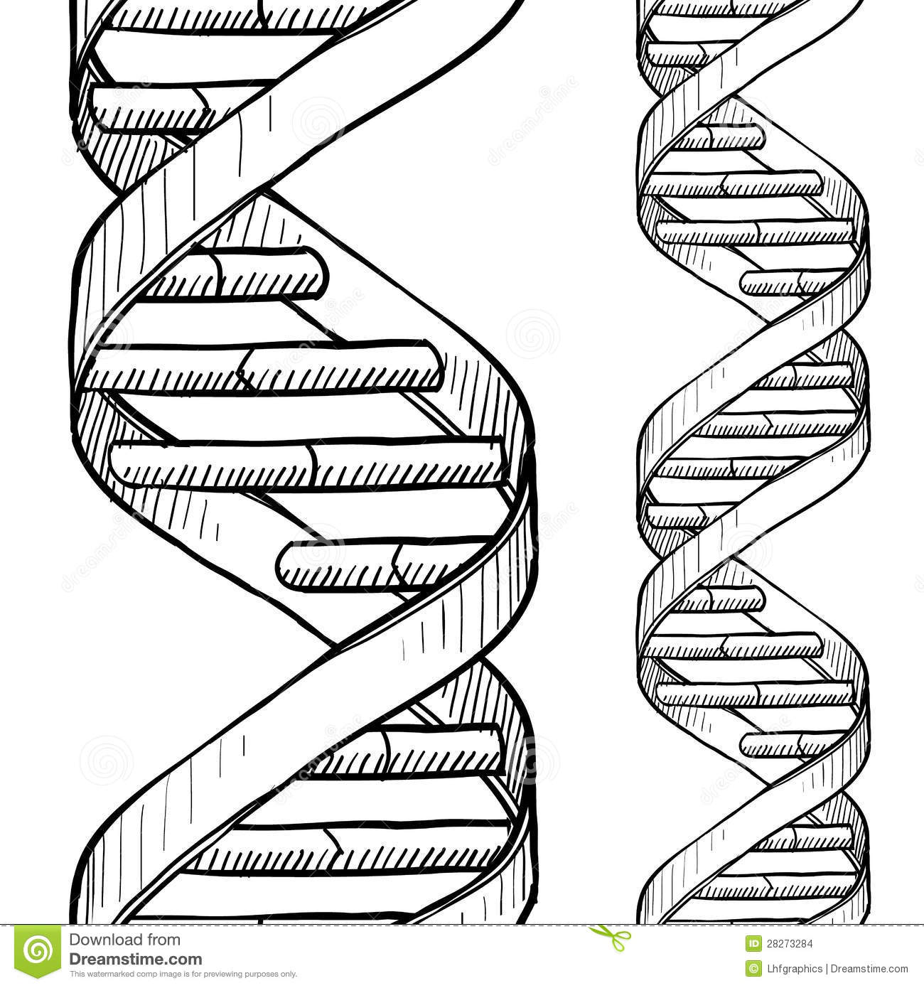 Dna Strand Drawing At Getdrawings