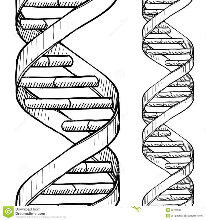 Dna The Double Helix Coloring Sheet Answers Irfandiawhite Co