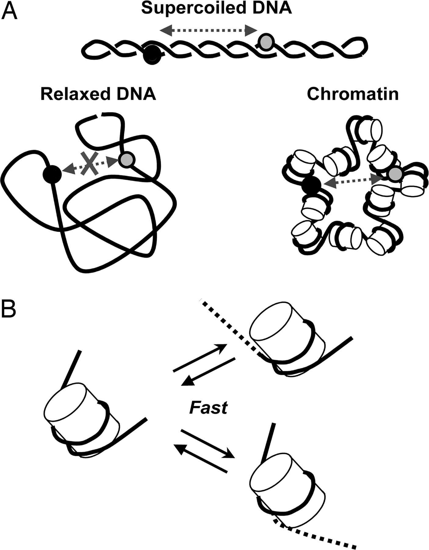 Dna Structure Drawing At Getdrawings