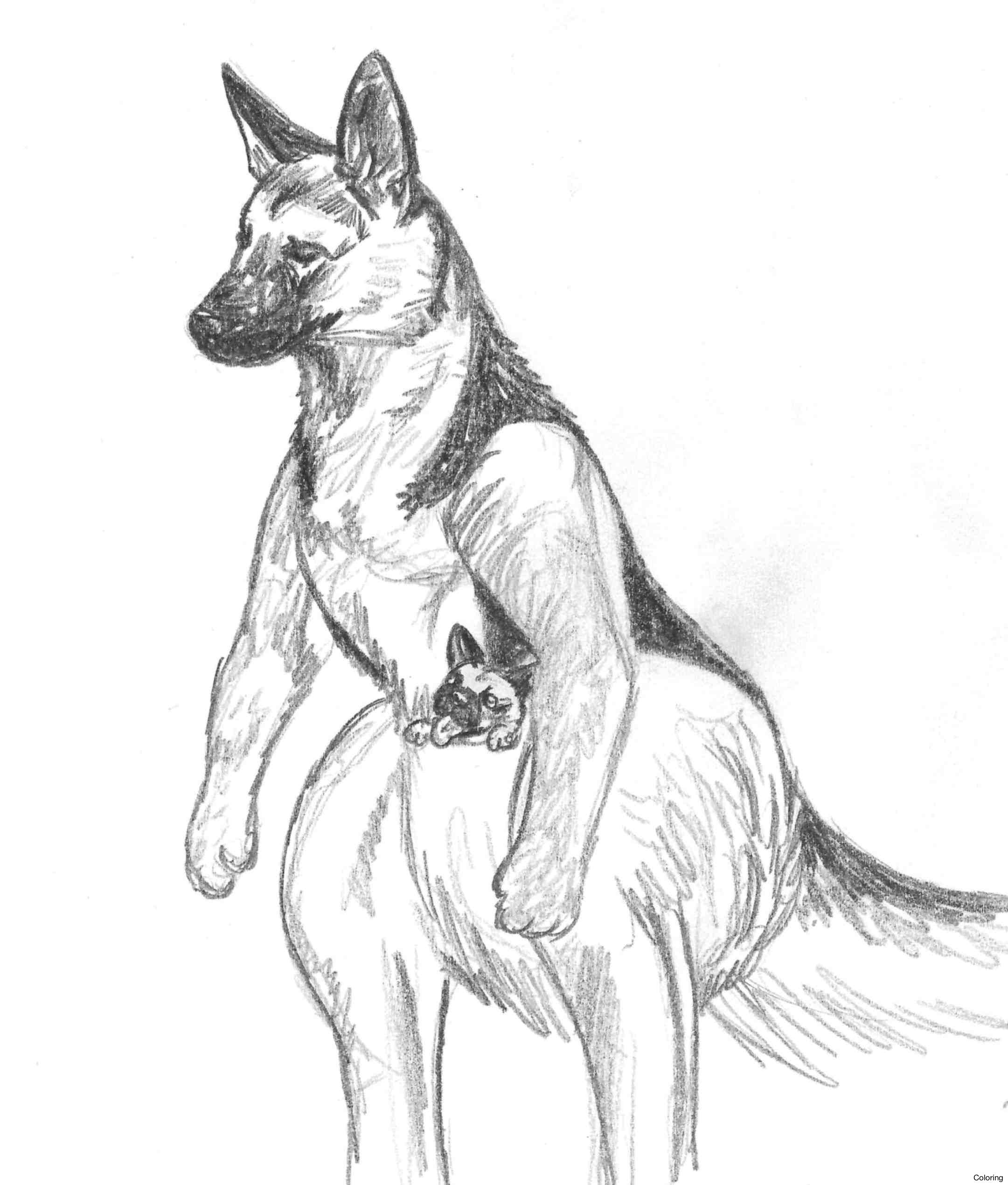 Dog Pencil Drawing Easy At Getdrawings