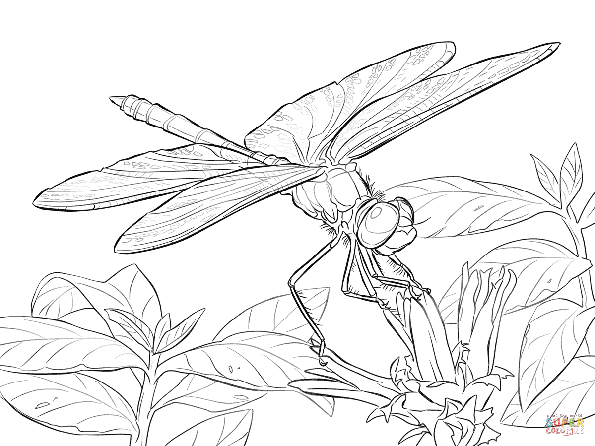Dragon Fly Line Drawing At Getdrawings