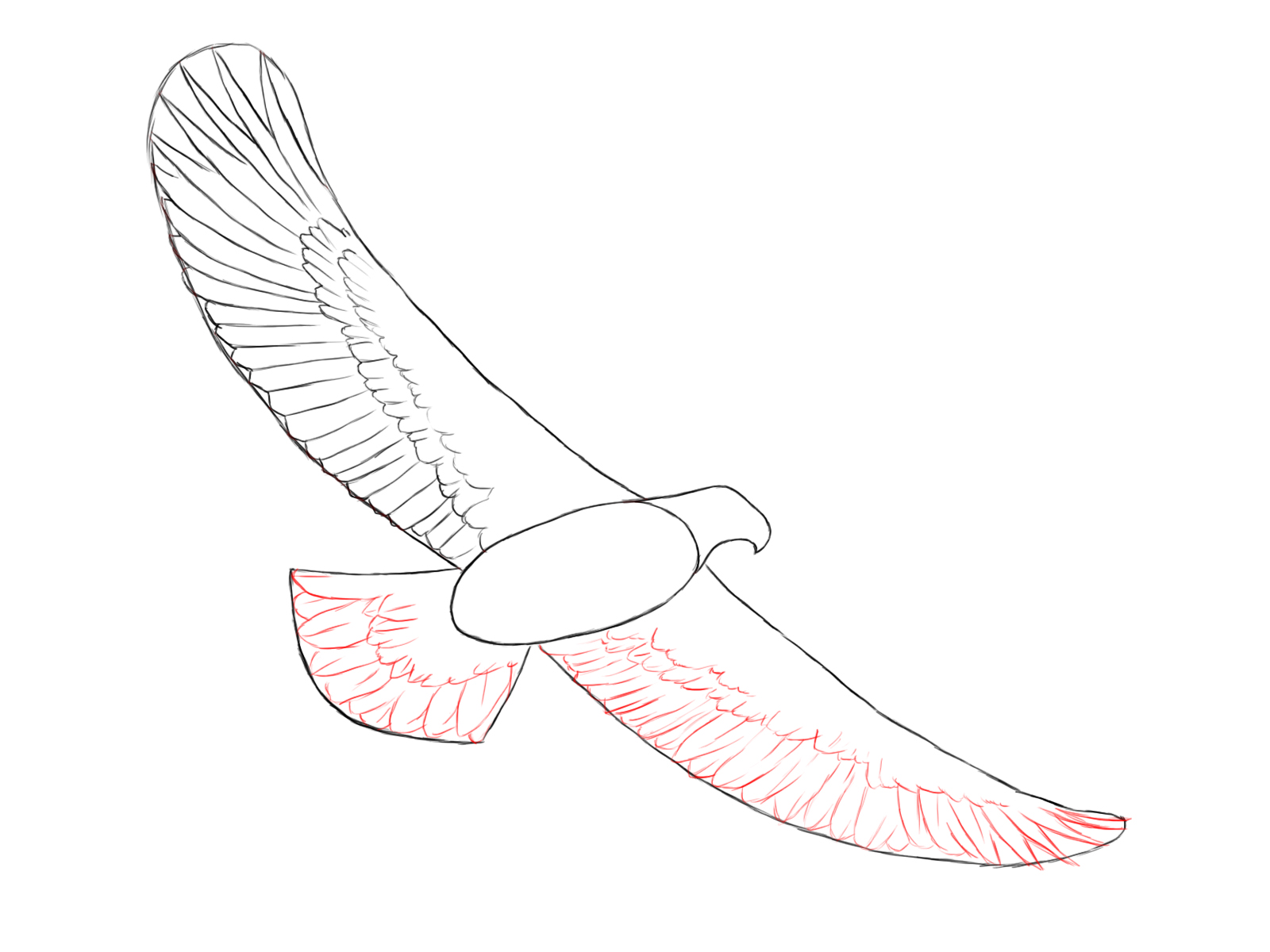 Eagle drawing images at getdrawings free for personal use