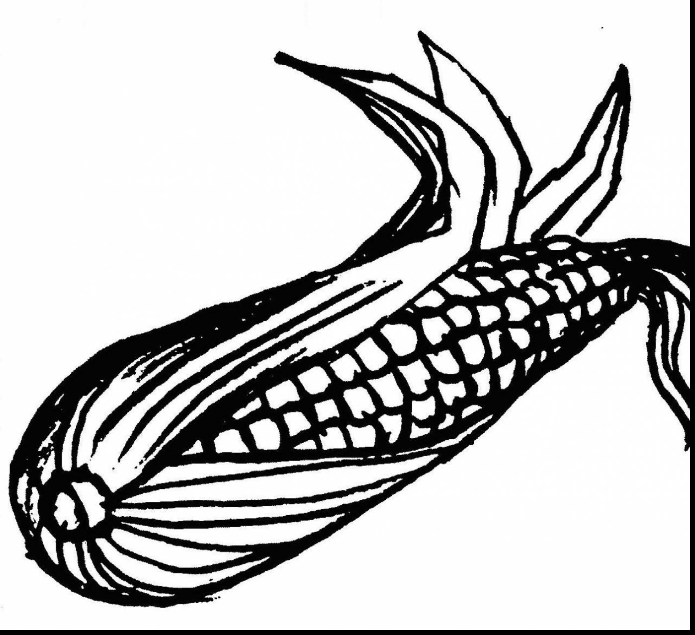 Ear Of Corn Drawing At Getdrawings