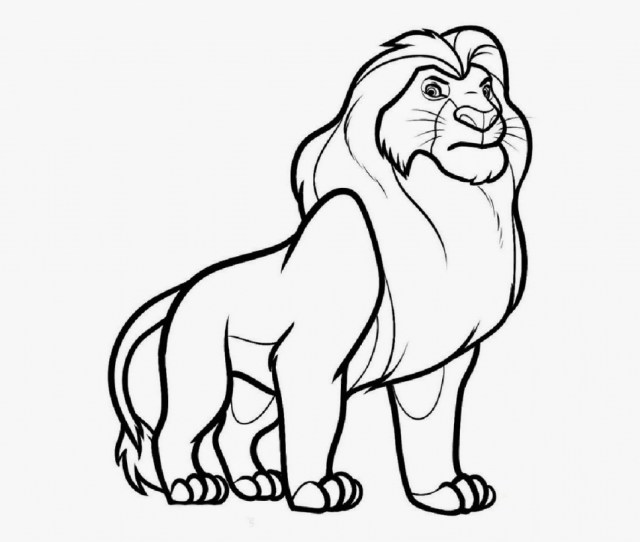 Easy Lion Drawing At Getdrawings Com Free For Personal Use Easy