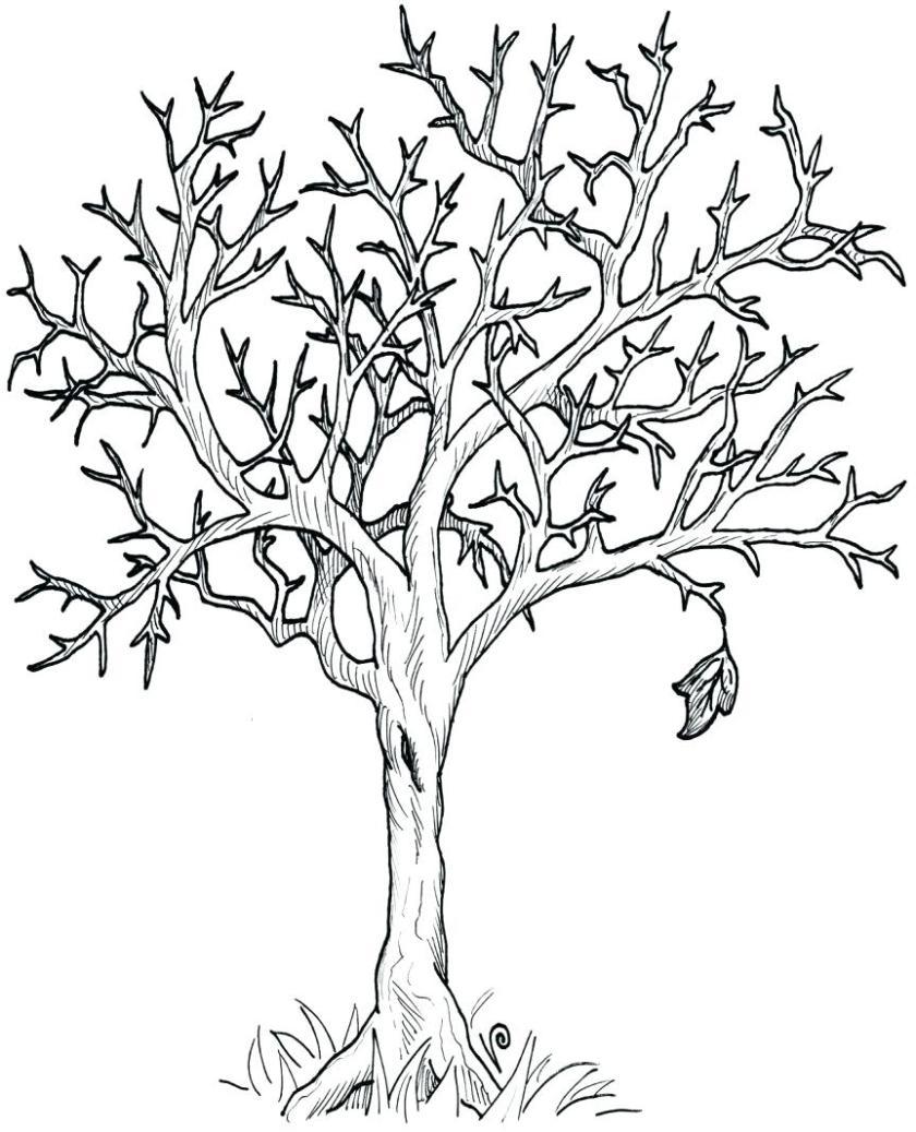 fall trees drawing at getdrawings  free download