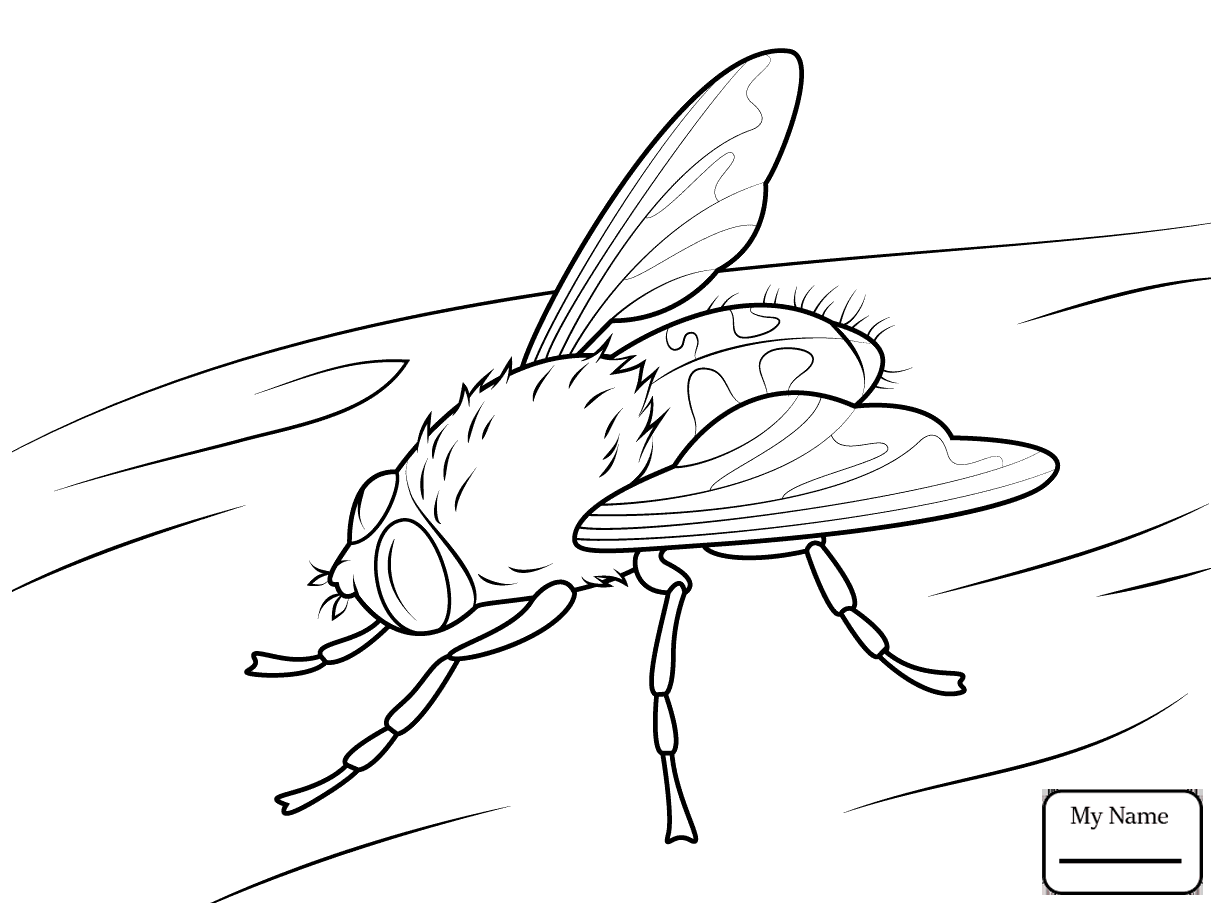 Firefly Coloring Page Free Coloring Pages Download | Xsibe lightning ...