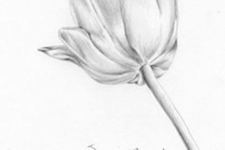 Pencil Paintings Of Flowers Full Hd Maps Locations Another World