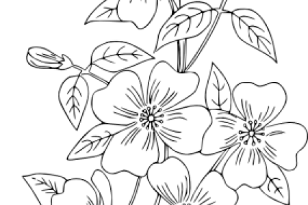 Modern Hand Embroidery Designs Free Download 4k Pictures 4k