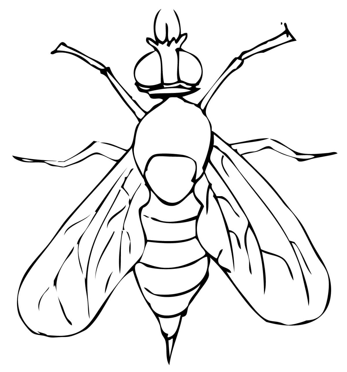 Fruit Fly Drawing At Getdrawings