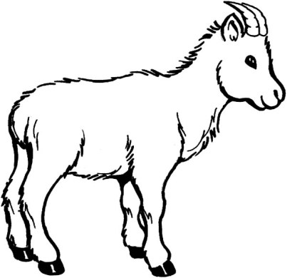 goat coloring pages to print » Agricshow   Nursery
