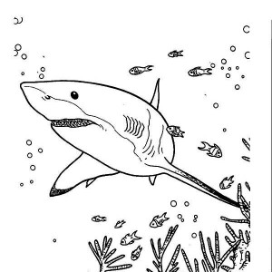great white shark coloring page # 57