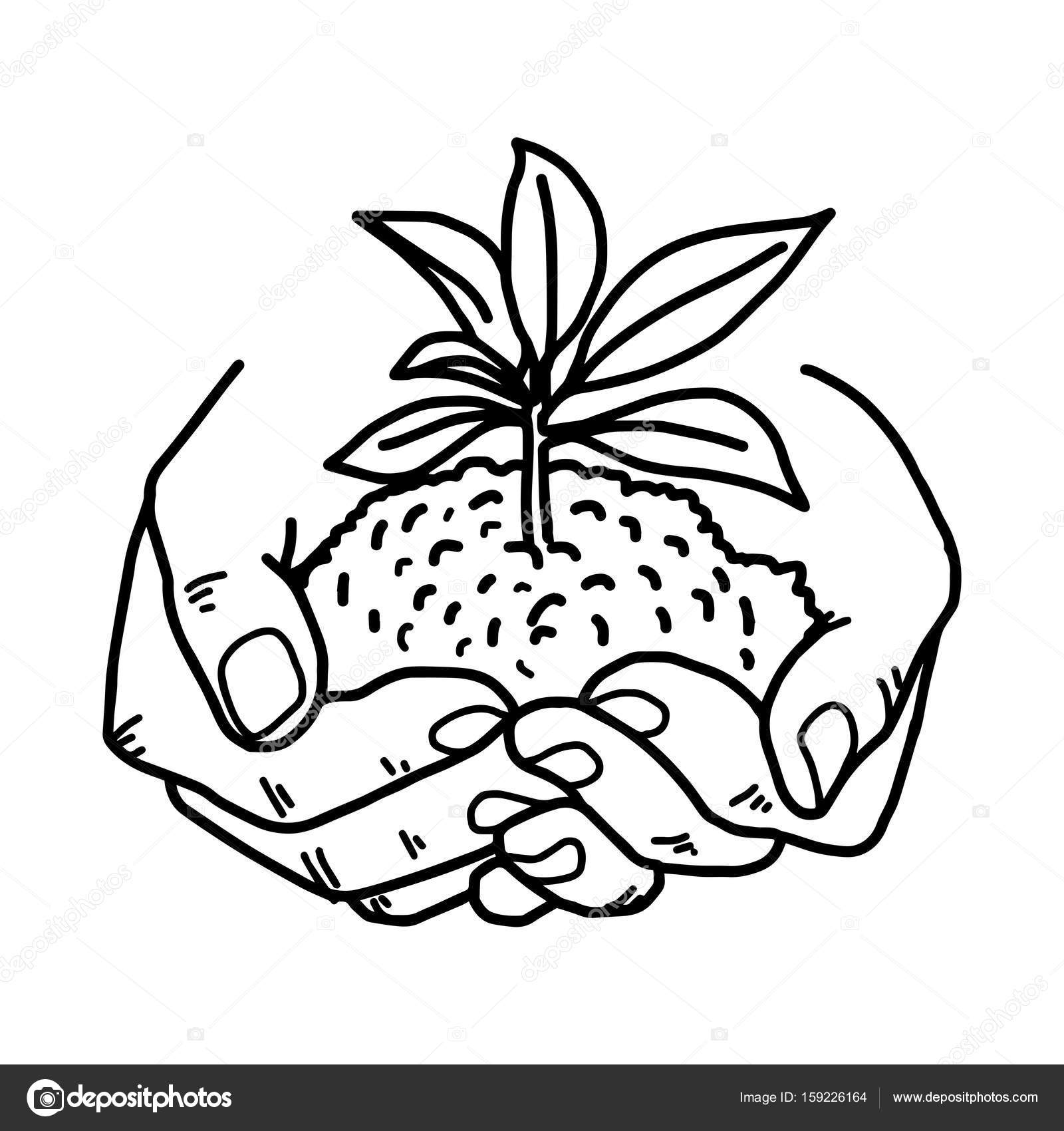Growing Plant Drawing At Getdrawings