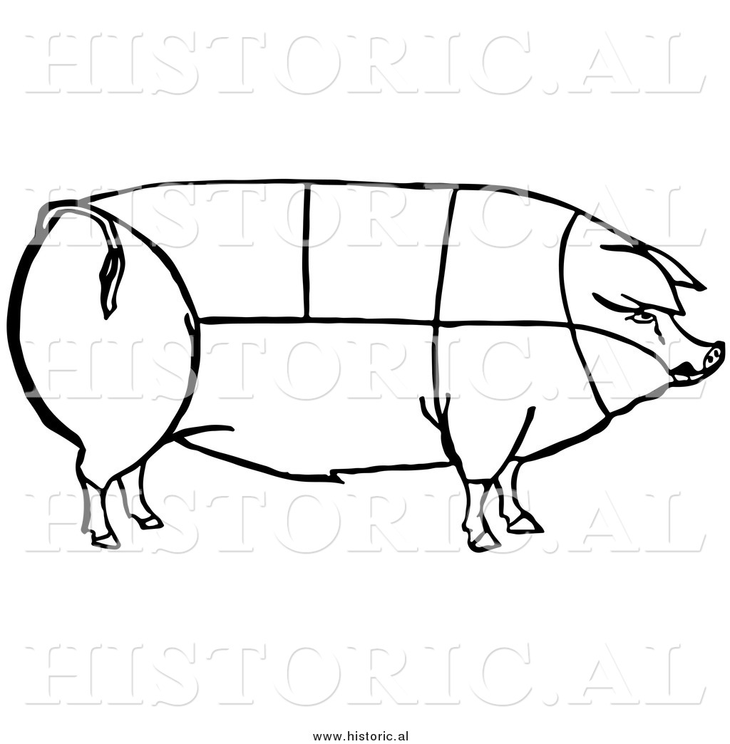 Ham Drawing At Getdrawings