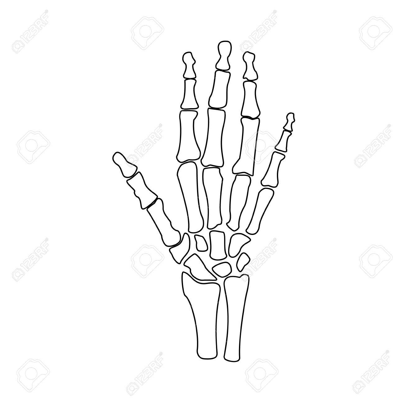 Hand Bones Drawing At Getdrawings